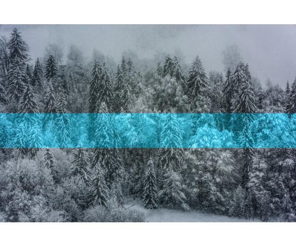 Blue Line Gilles Pernet - Vente d'Art