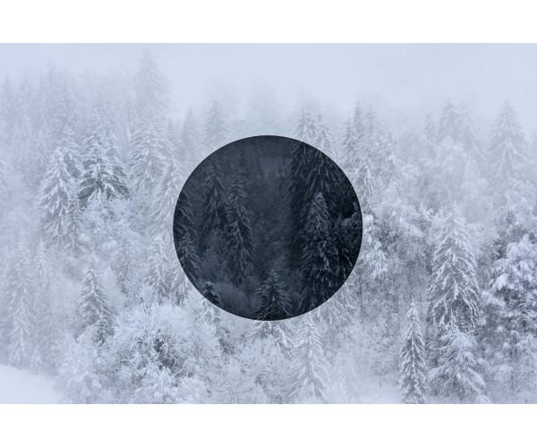 Black Silence Gilles Pernet - Vente d'Art