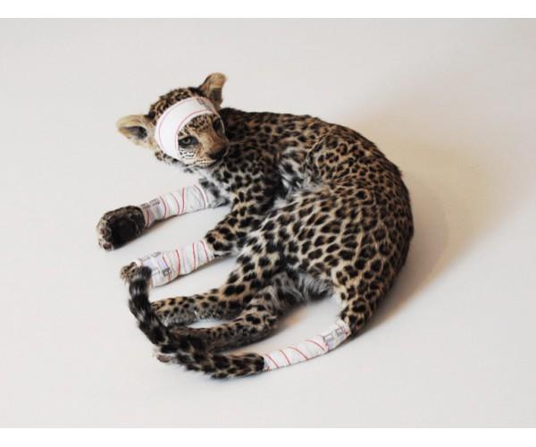 Jeune Leopard Série Accidents de chasse Pascal Bernier - Vente d'Art