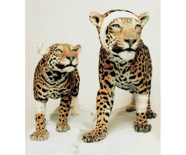 Couple de Jaguars  Pascal Bernier - Vente d'Art