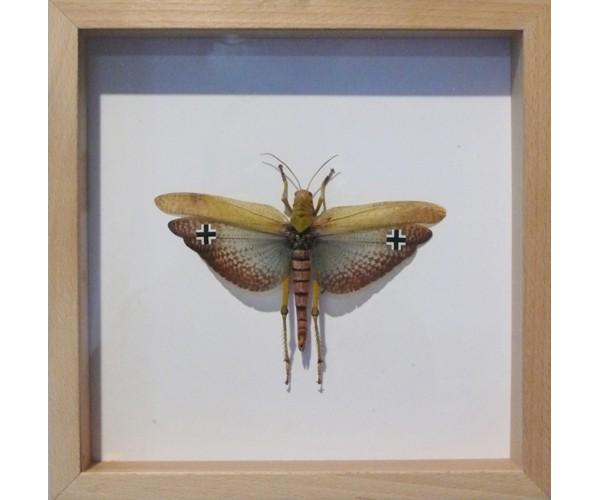 WWF Luftwaffe Pascal Bernier - Vente d'Art