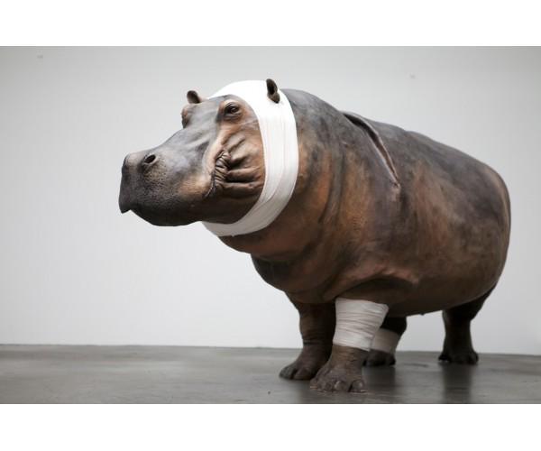 Hippopotame Série