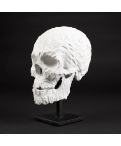 Skull brut
